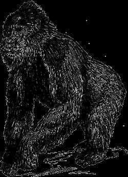 Der Affe im chinesischen Horoskop