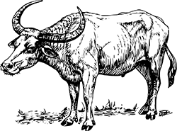 Der Büffel im chinesischen Horoskop